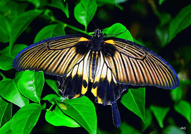 Bali-2000- 012