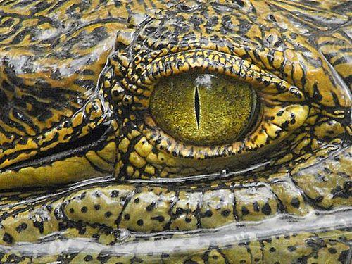 Oeil croco