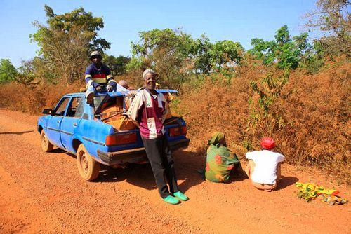 Abeilles-Cameroun05