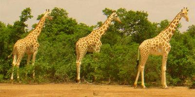 Girages Niger 2