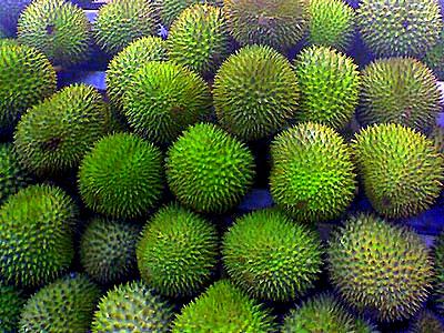 Durians02