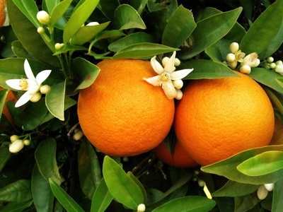 Oranger1