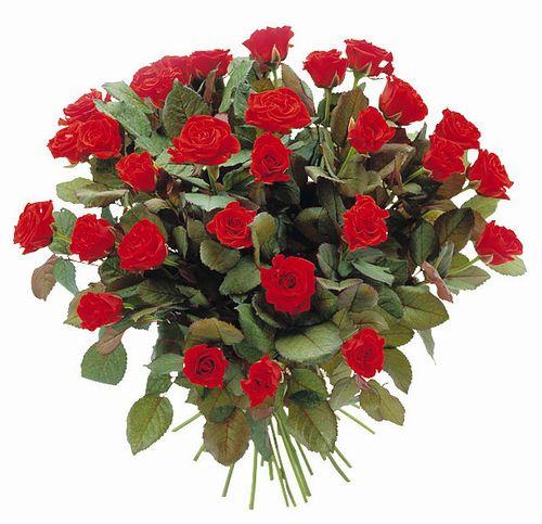 Fleurs- roses