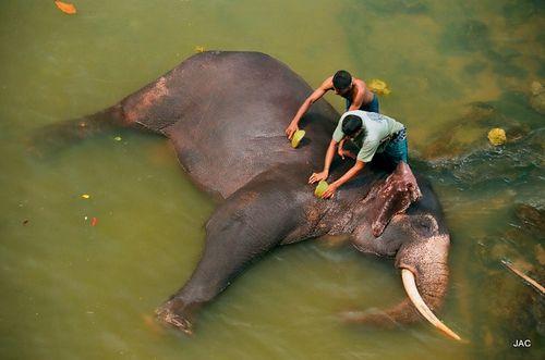 Sri Lanka Juillet 2010 -2- 007