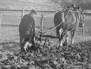 Oncle-Louis-le-cheval-les-labours-manuel-1906-des-soins-aux-chevaux