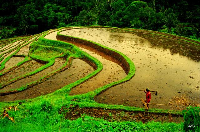 Bali-2000-9