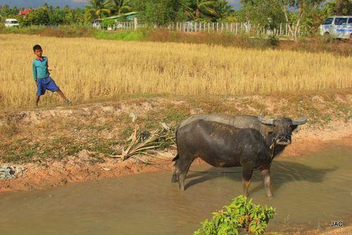 Cambodge 3 - janvier 2012 539-1