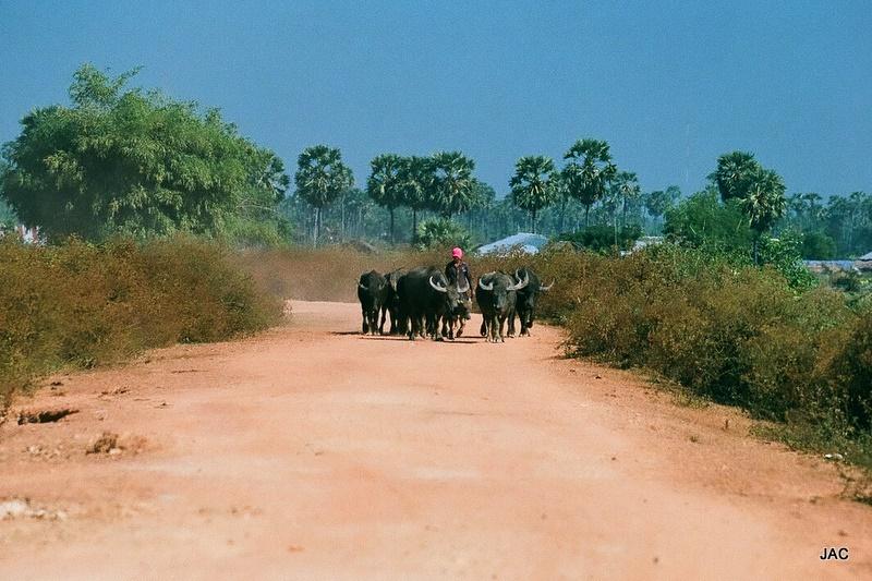 Cambodge - Décembre 2010 006
