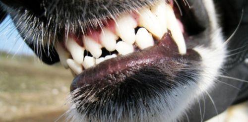 Hund der beisst