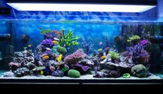 Aquarium-corals-reef-001