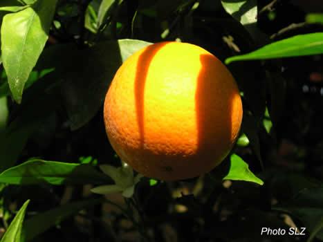 Mon_orange_opt