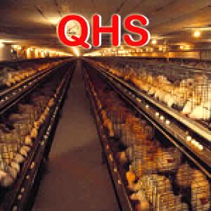 Qhs_opt