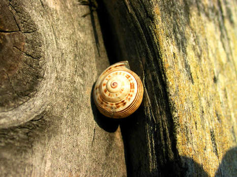 Caracol_opt