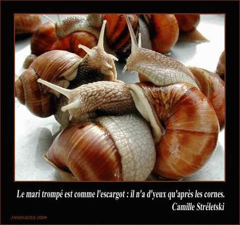 Escargots_en_dlire_opt