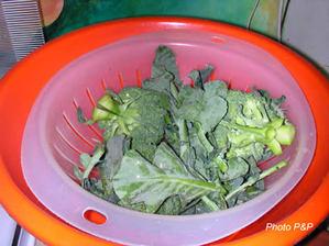 Broccoli_lavs_opt